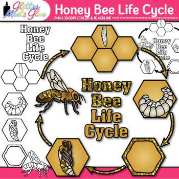 Honey Bee Life Cycle Clip Art {Great for Animal Groups ... - photo#2