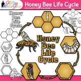 Honey Bee Life Cycle Clip Art: Insect and Bug Graphics {Gl