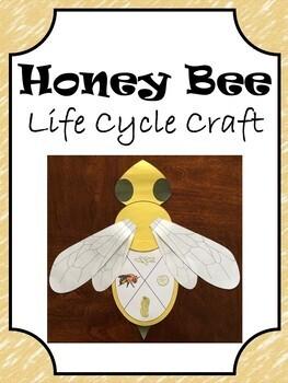 Honey Bee Life Cycle Craft