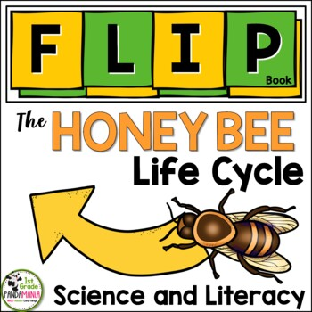 Honey Bee Life Cycle Flip Book By 1st Grade Pandamania Tpt