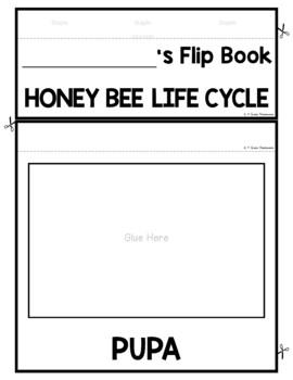 Honey Bee Life Cycle FLIP Book