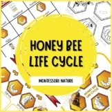 Honey Bee Life Cycle | Nature Curriculum in Cards | Montessori