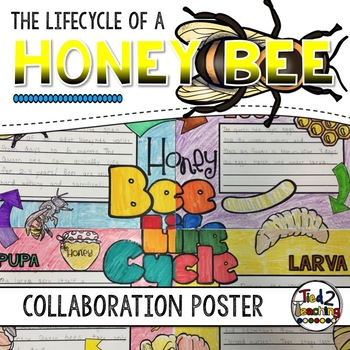 Honey Bee Lifecycle Activity: Collaborative Research Poster