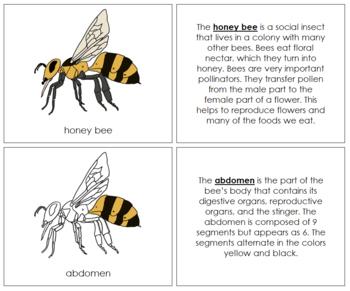 Honey Bee Nomenclature Book