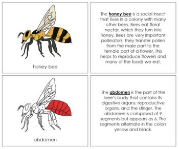 Honey Bee Nomenclature Book - Red