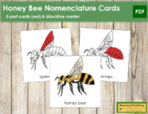 Honey Bee Nomenclature Cards (Red)