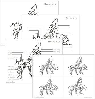 Honey Bee Nomenclature - Elementary