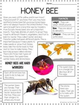 Honey Bee Reading Passage ::FREEBIE::