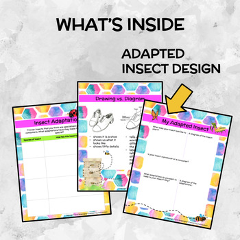 Honey Bee Study - Insect Adaptations FREEBIE!