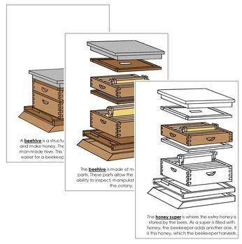 Beehive Nomenclature Book
