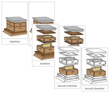 Honey Beehive Nomenclature Cards