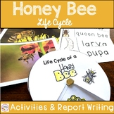 Honey Bees Life Cycle and Report