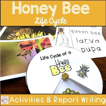 Honey Bees- Life Cycle