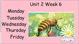 Honey Bees - Unit 2 Week 6