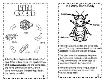 Honey Bees for Kids!
