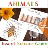 Honey bee ANATOMY & LIFE CYCLE, Body parts, Diagram, Printable handmade resource