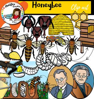 Honey bee clip art-  Big set of 98 graphics!