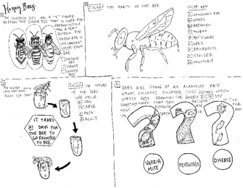 Honey bee coloring sheet