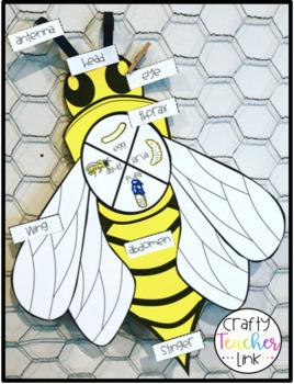 Honeybee Life Cycle Craftivity