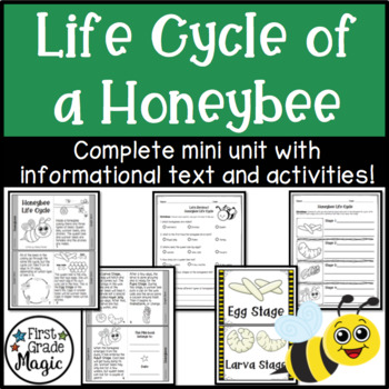 Honeybee Life Cycle Informational Text and Activity Sheets