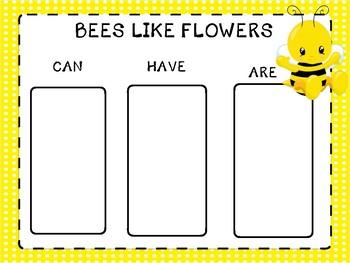 End of the Year/Preschool-2 Honeybee Life Cycle Unit