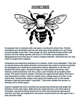 Honeybee Overview and Coloring Worksheet
