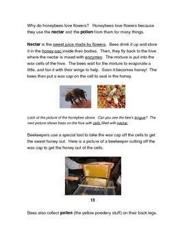 Honeybees Week Long Unit