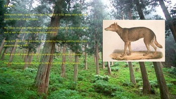 Honshu Wolf - Power Point - Extinct Information Facts Pictures History