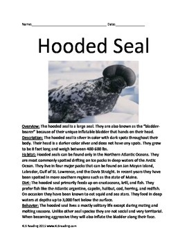 Hooded Seal - endangered informational article facts questions vocabulary lesson