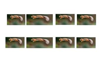 Hop Old Squirrel