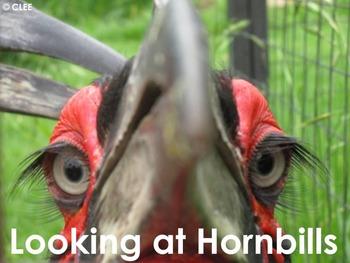 African Birds: Hornbill - PDF Presentation