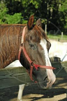 Horse 1 - Stock Photo