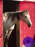 Horse #1 Stock Photo