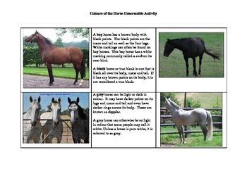 Horse Activities Package