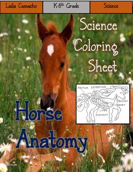 Horse Anatomy Craft