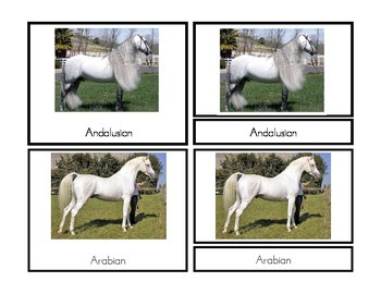 Horse Breed Three-Part Cards