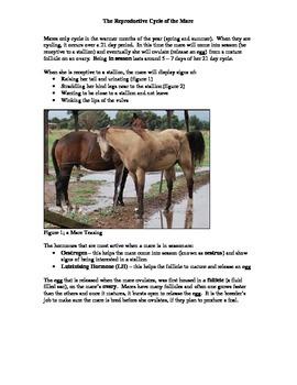 Horse Breeding Activity