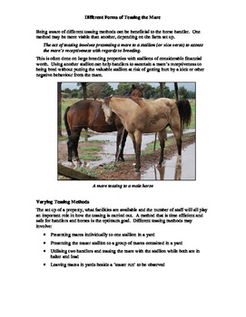 Horse Breeding Package