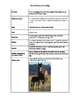Horse Breeding Terms Mix and Match Activity
