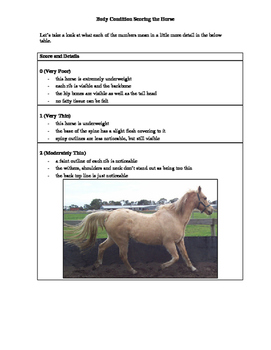 Horse Condition Scoring Handout