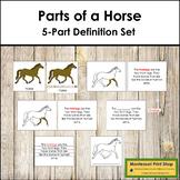 Horse Definition Set - Montessori Nomenclature