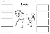 Horse Diagram and Labels