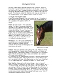 Horse Digestion Fact Sheet