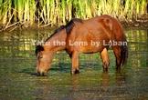 Horse Eating Stock Photo #243