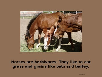 Horse Facts Power Point