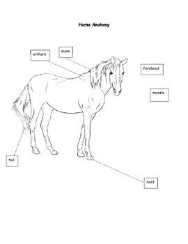 Horse Freebie