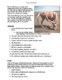 Horse Icebreakers Activity