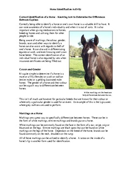 Horse Identification Activity