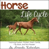 Horse Life Cycle