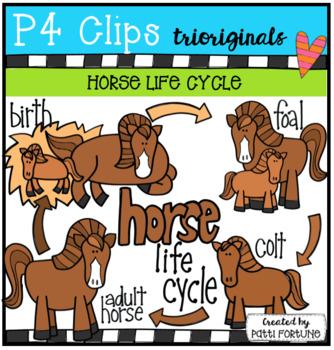 Horse Life Cycle (P4 Clips Trioriginals)